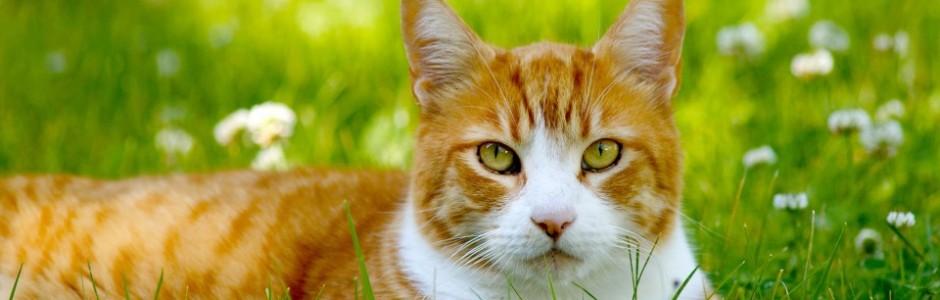 Kattvård